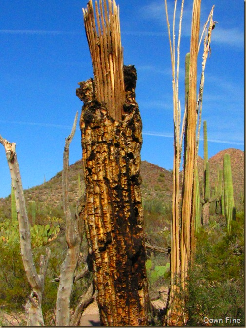 Sonoran NP west_011