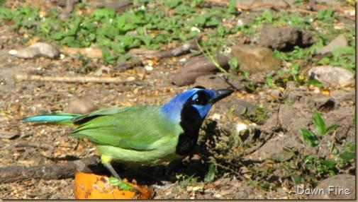 Padre Island birding_218