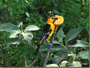 Padre Island birding_236