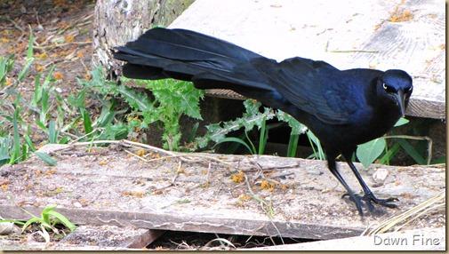 Padre Island birding_019