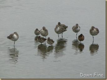 Padre Island birding_046