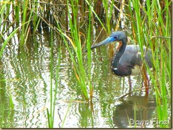 Padre Island birding_089