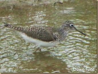 Padre Island birding_138