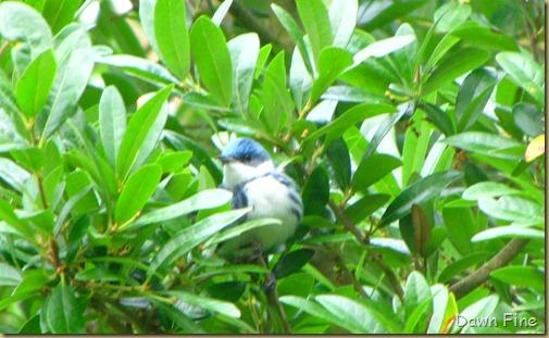 birding high island_071