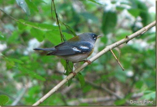 birding high island_060