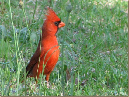 Birdies_20090427_009