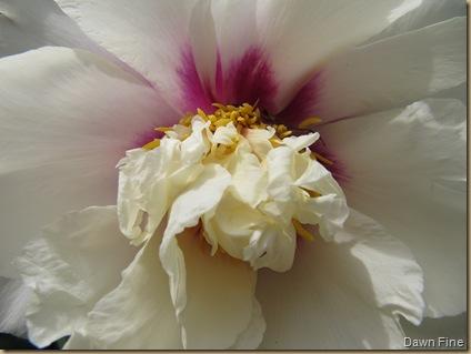 Flower closeups_20090503_004