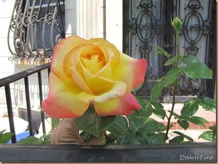 Sams garden _20090524_002