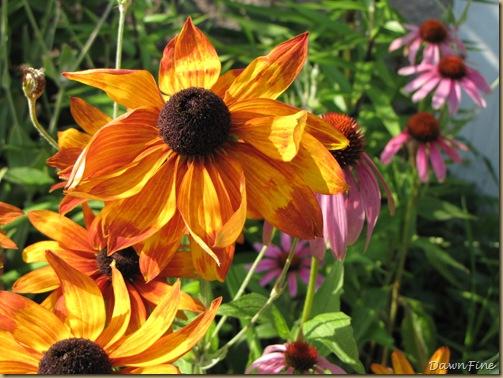 loris garden_20090718_015