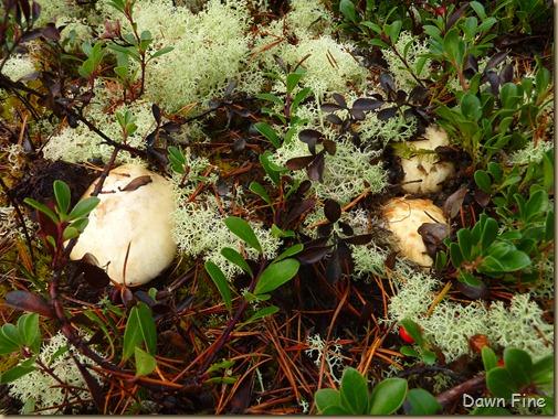 Mushroom picking sutton_024