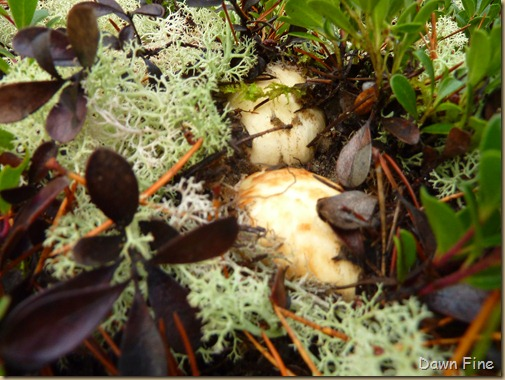 Mushroom picking sutton_023