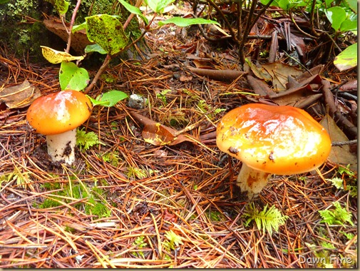 mushroom foray_001