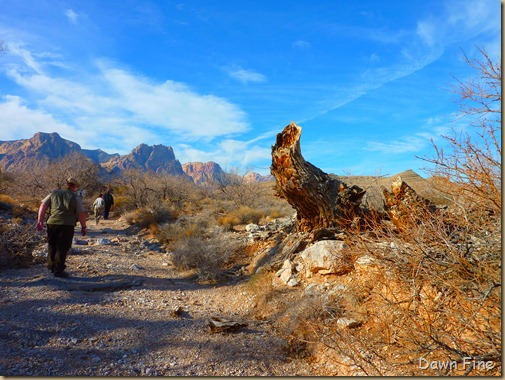 Christmas bird count red rock canyon_065