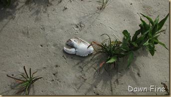 south beach birding_012