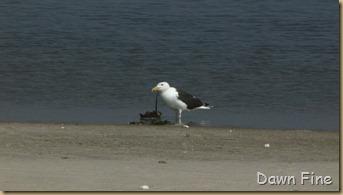 south beach birding_017