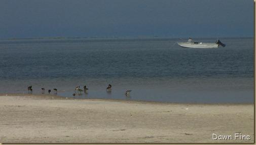 south beach birding_047