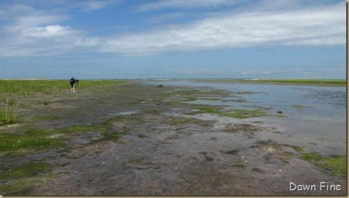 south beach birding_095