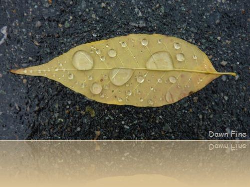 leafy walk_004
