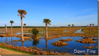 Viera wetlands_056
