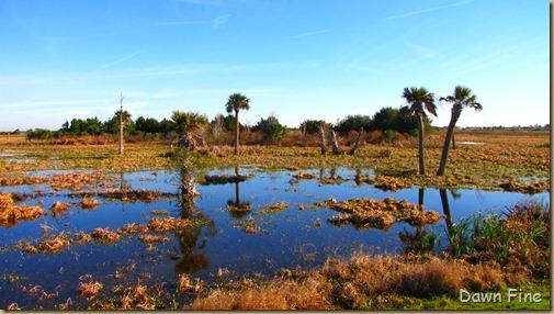 Viera wetlands_060