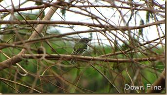 Green Cay_154