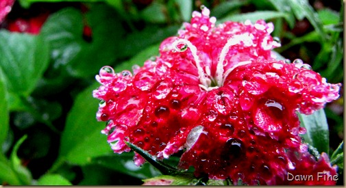 Water droplets and flowers_012 (1)