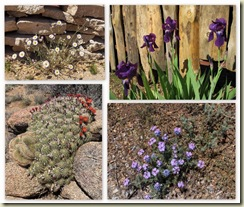 03 Yarnell spring flowers collage (800x678)