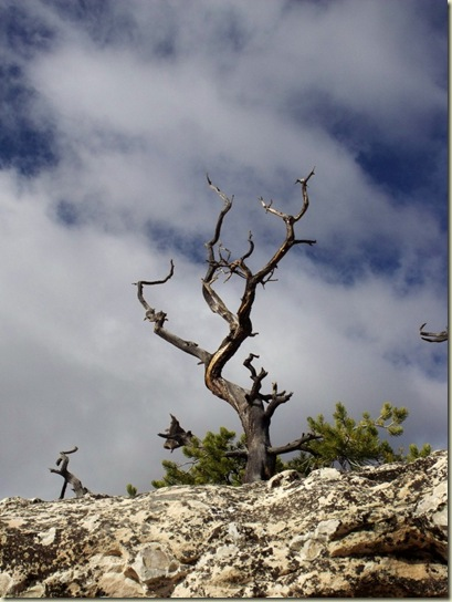 09 Dead tree against sky along Bright Angel Point trail NR GRCA NP AZ (768x1024)