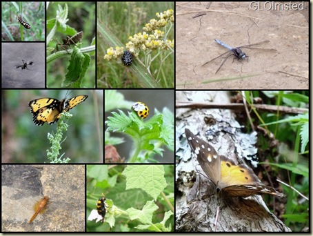 06 Bugs along Sterkspruit trail collage (1024x768)