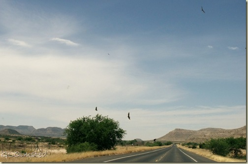 01 Turkey vultures kettling over carrion SH90W TX