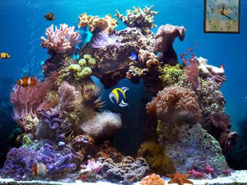 Beautiful Reef 3D Aquarium wallpaper
