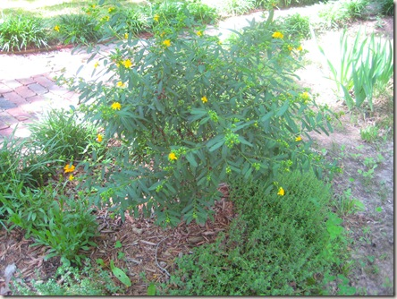 green bush with yellow flowers