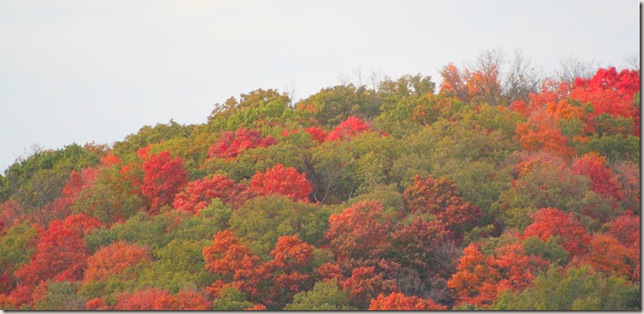 Hillside of Fall colored trees