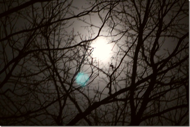 Full moon shining through tree branches