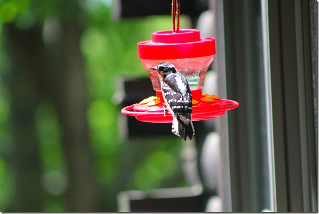Bird of unknown origin sitting on the hummingbird feeder