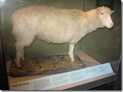 Dolly esposta al Royal Museum of Scotland