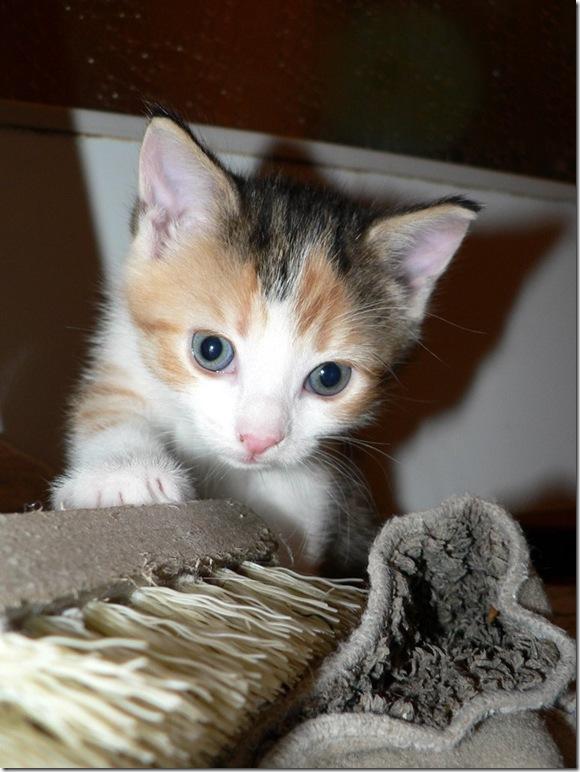 exploring-kitten