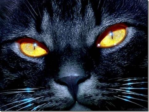 medium_occhi_di_gatto