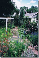 Lavender Thyme Path (2)