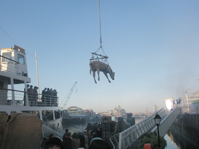 shot showing cow suspended over Liffey dock with AIB headquarters visible in the background