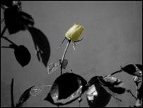 Rosas 05 [640x480]