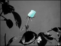Rosas 13 [640x480]