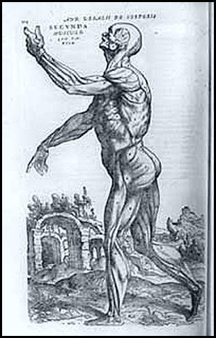 estudo anatômico de Vesalius - histoblogsu
