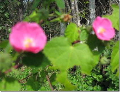 flowers 11-09 008