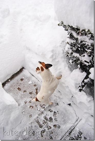 snow feb 6, 2010 001