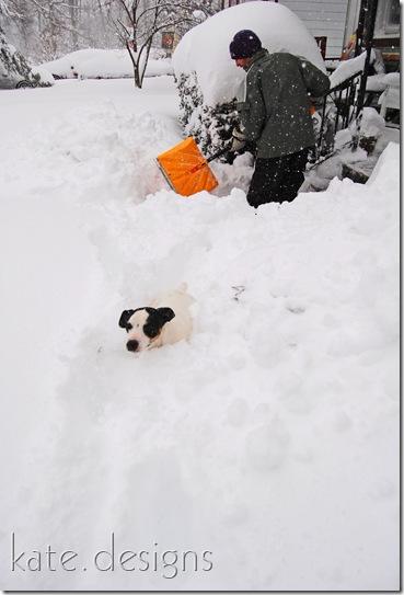 snow feb 6, 2010 002
