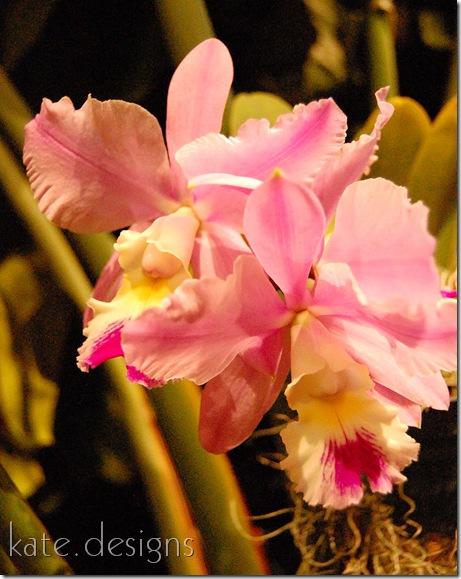 DC - Cherry Blossom Festival & Smithsonian 268