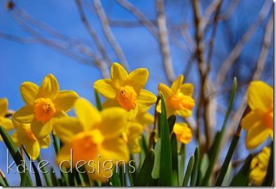 woods cdc spring 09 191