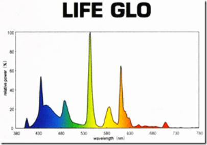 hagen-t5-ho-life-glo-6700k