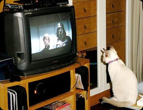 cool star wars photos cat love star wars new hope movie
